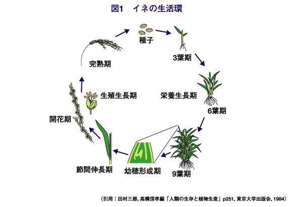 農芸化学という学問と社会