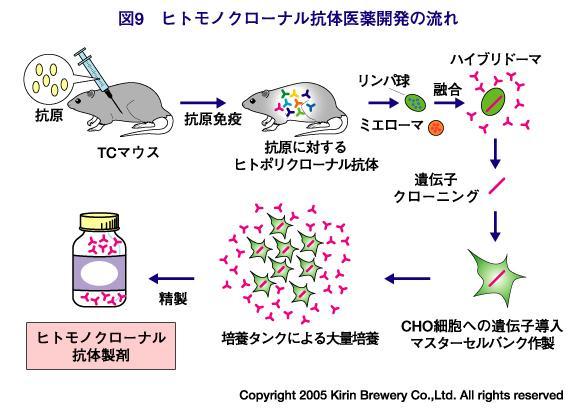 how to make monoclonal antibodies